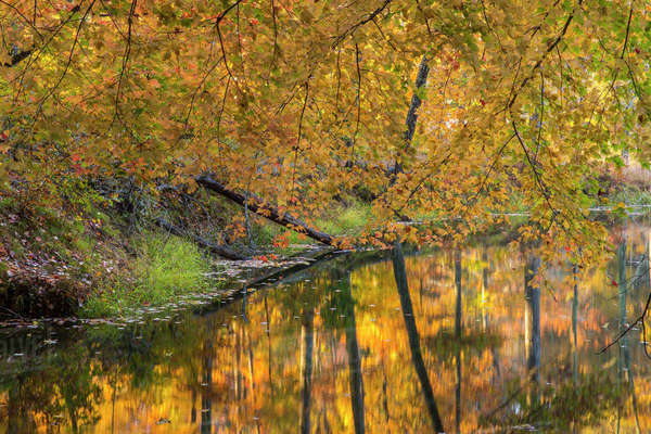 Autumn reflection in small inlet on Lake Ogle in autumn in Brown County State Park, Indiana, USA Rights-managed stock photo