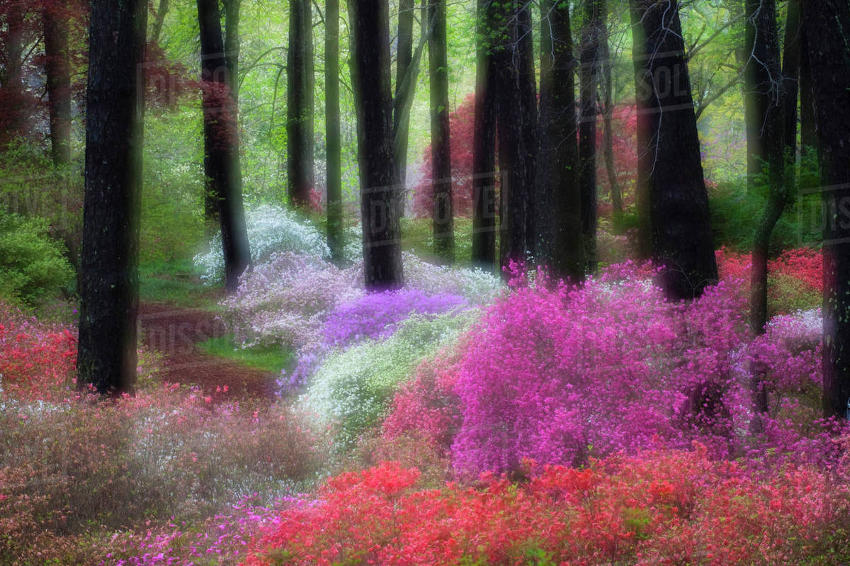 USA, Georgia, Callaway Gardens. Impressionistic View Of Trees And Flowering  Bushes.