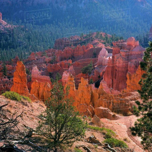 North America, USA, Utah, Bryce Canyon, N.P., Spires and Pinacles Rights-managed stock photo