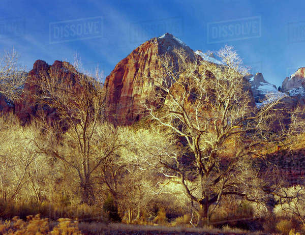 Zion National Park, Utah. USA. Cottonwood trees in winter below Meridian Tower in Towers of the Virgin. Virgin River flood plain. Zion Canyon. Rights-managed stock photo
