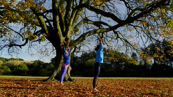 Two mature women doing yoga in park Royalty-free stock video