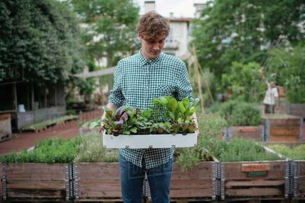 Man in garden holding tray of plants Royalty-free stock photo