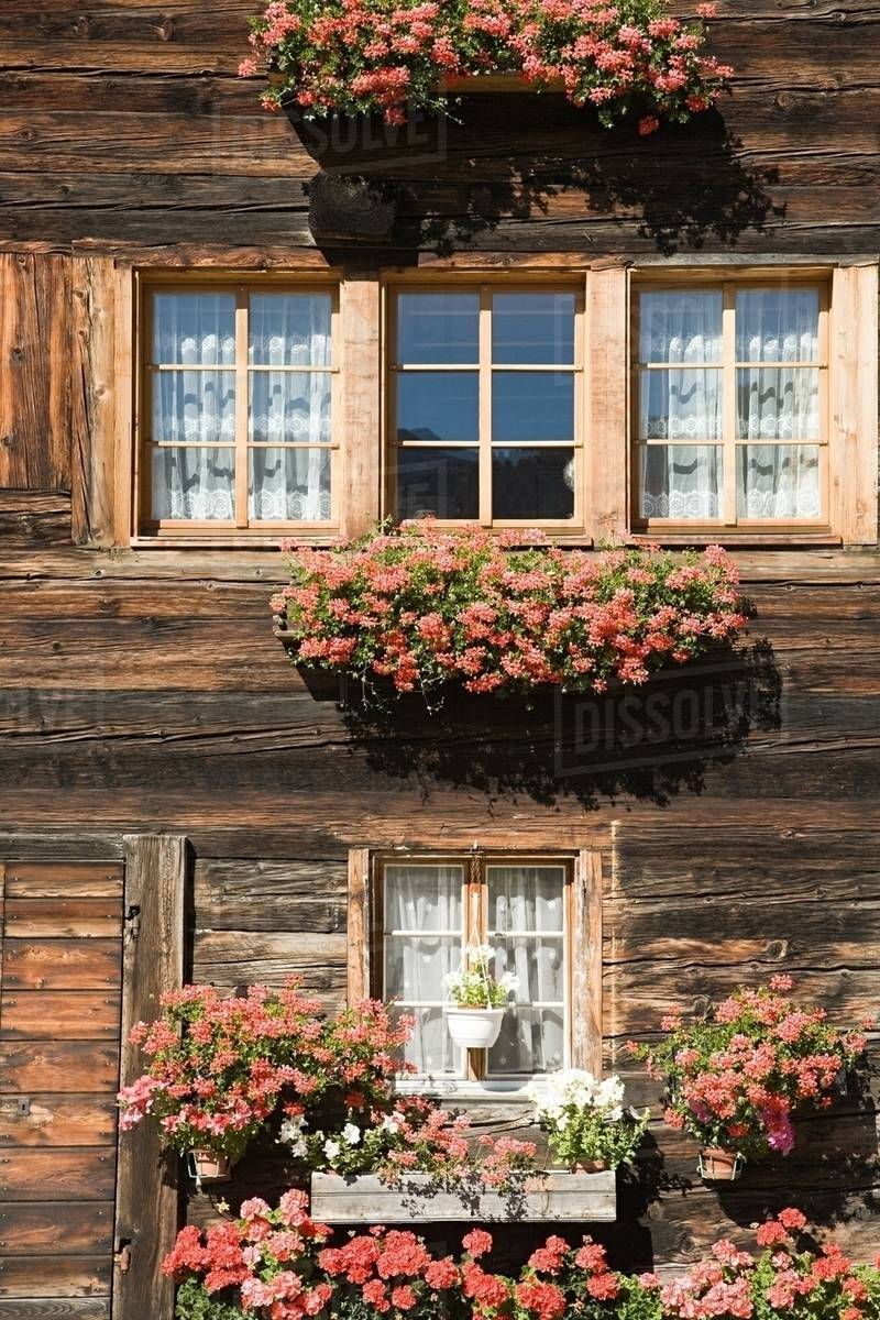 Flowers outside a swiss house D25_34_204