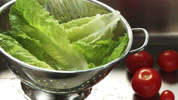 Washing romaine lettuce in a colander Royalty-free stock video