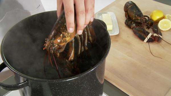 Putting lobster into hot water Royalty-free stock video
