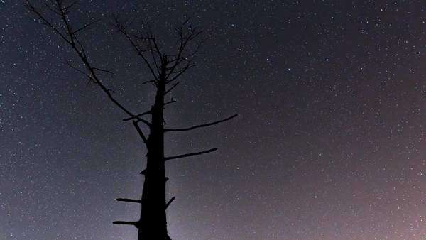 Timelapse of stars with a dead tree in British Columbia, Canada Royalty-free stock video
