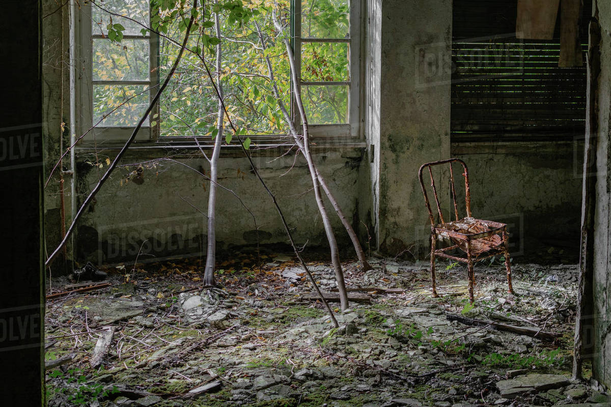 Old abandoned house building room in the wood whit windows and plant that grow inside and a chair cover with rust Royalty-free stock photo