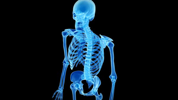 human skeleton, animation. - stock video footage - dissolve, Skeleton
