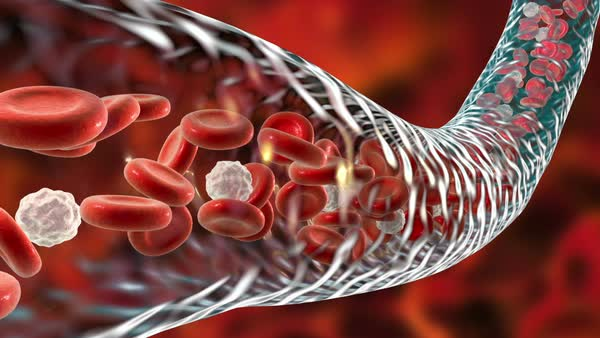 Animation Of Red And White Blood Cells Flowing Through A