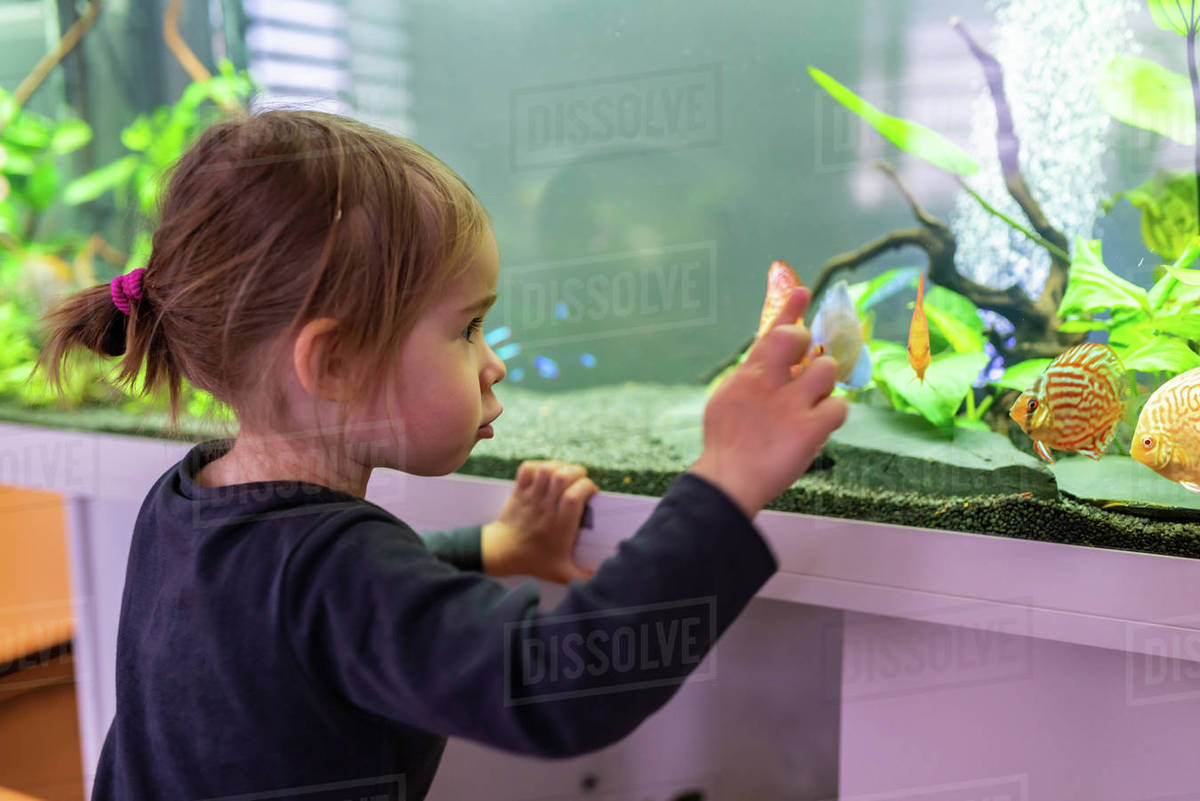 2 year old child indoors watching fish swiming in big fish tank, aquarium. Aquaria concept. Selective focus Royalty-free stock photo