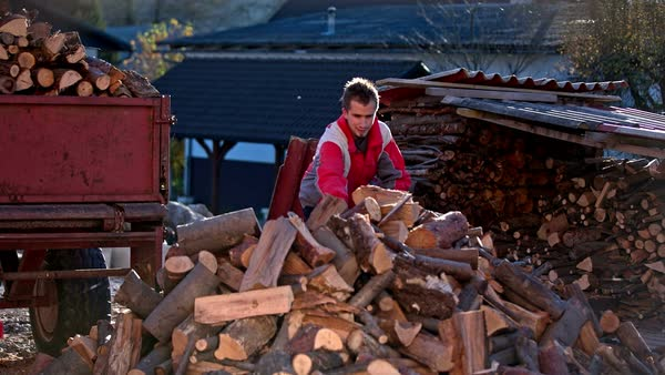 Man stacking firewood inside a shed Royalty-free stock video