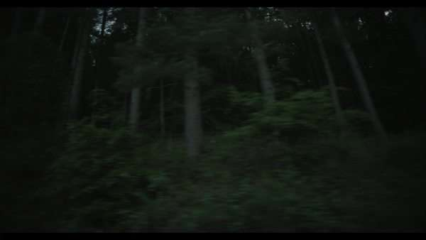 Dolly shot and low angle view of a dense pine tree forest Royalty-free stock video