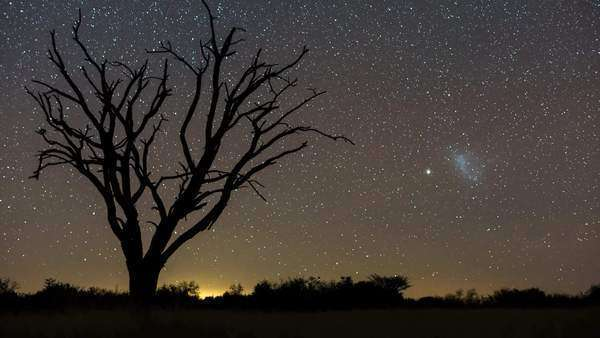 A scenic static night timelapse of a dead Acacia Tree with the Milky Way twisting through a dark landscape scene and the moon rises to light up the landscape Royalty-free stock video
