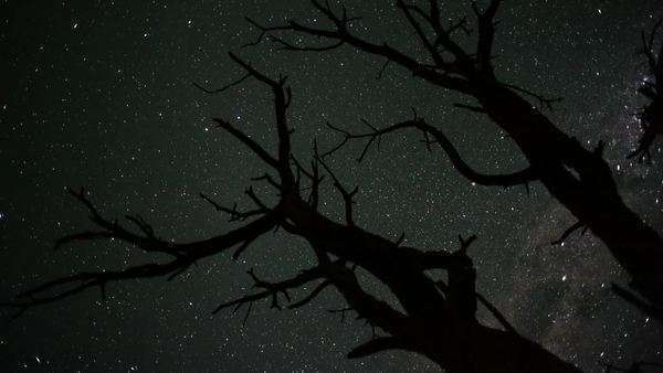 Timelapse from a low angle shooting up towards a dead Acacia Tree, silhouetted against the African night sky with the Milky Way moving into the shot Royalty-free stock video