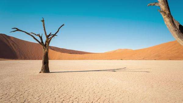 Static timelapse of a landscape scene in Deadvlei, Namibia with a solidified tree in a white clay pan Royalty-free stock video