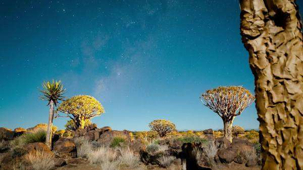 Timelapse of a Quiver Tree forest at night against a starry sky in a moonlit landscape as the moon sets with the Milky Way and shadows passing through Royalty-free stock video