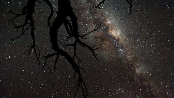 Timelapse shot from a low angle shooting up towards a dead Acacia Tree, silhouetted against the African night sky with the Milky Way moving through Royalty-free stock video