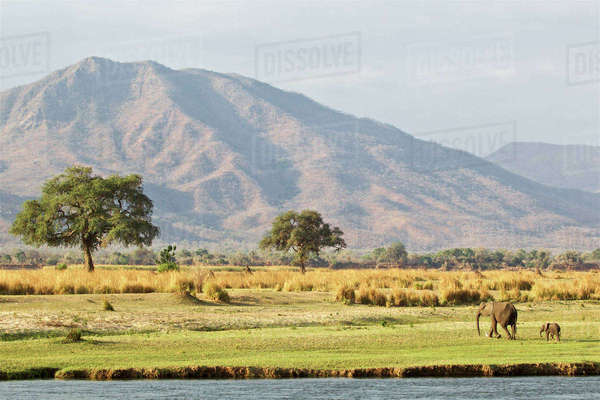 Landscape of Mana Pools, Zimbabwe with a mother and calf elephants Royalty-free stock photo