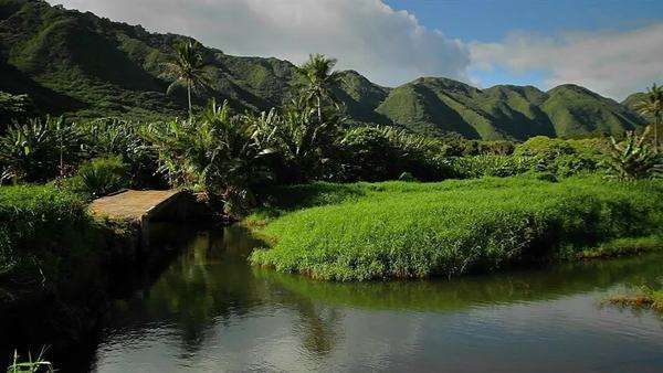Pan across a Hawaiian jungle landscape with canyons and small lake Royalty-free stock video