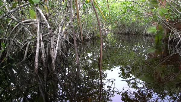 POV from a boat through the Florida Everglades. Royalty-free stock video