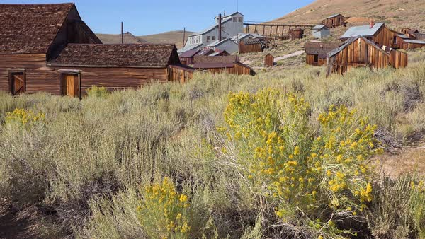 Sagebrush grows in the ghost town of Bodie, California. Royalty-free stock video