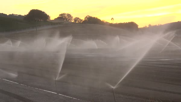 Sprinklers water a dry field in California during a drought. Royalty-free stock video