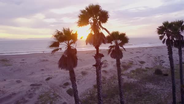 Flying by aerial of palm trees and a California beach scene. Royalty-free stock video