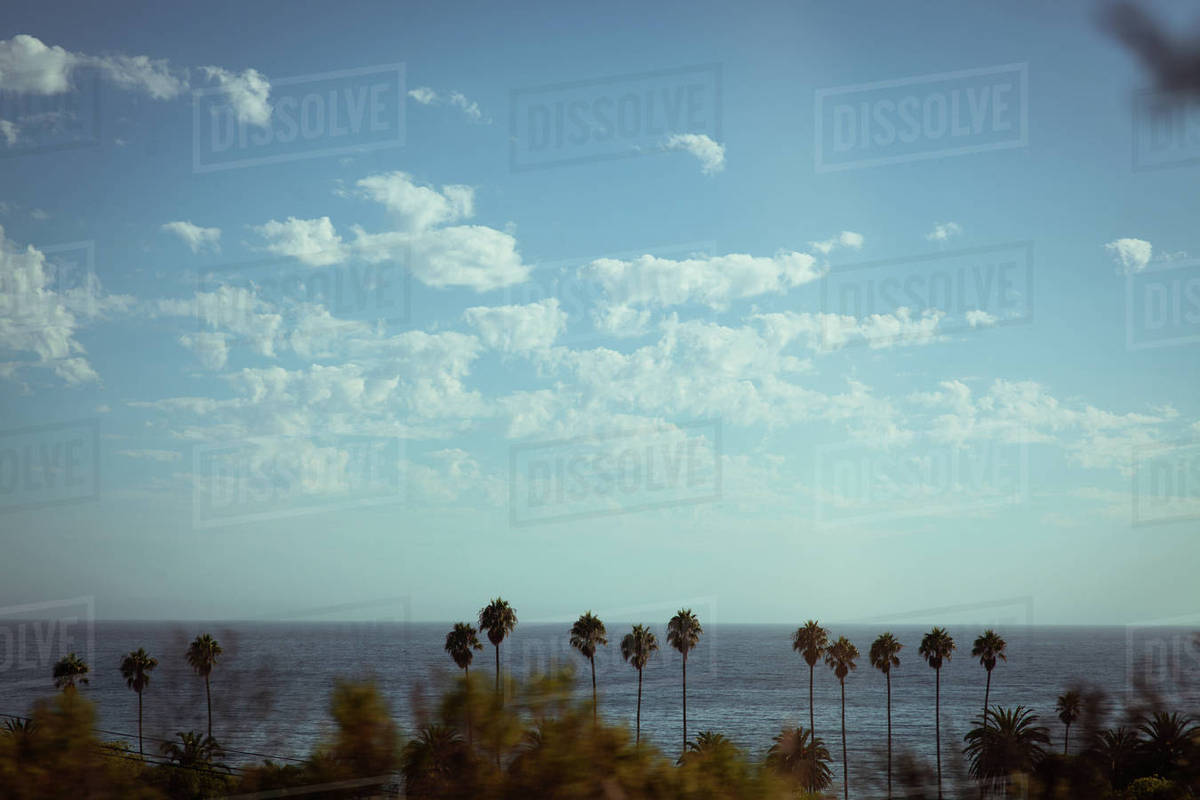 View of palm trees with ocean in background Royalty-free stock photo