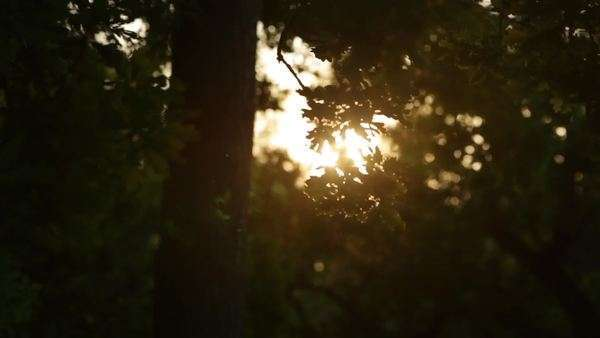 Sun flare through tree branches Royalty-free stock video