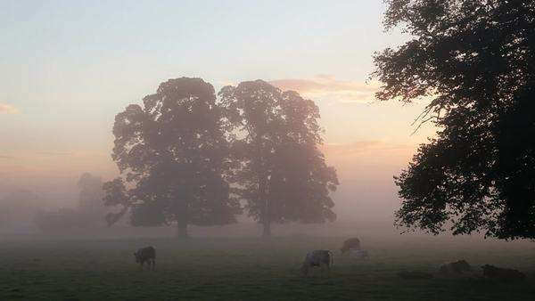 View of cows in mist filled fields at dawn, Usk Valley, nr Usk, South Wales, UK Royalty-free stock video