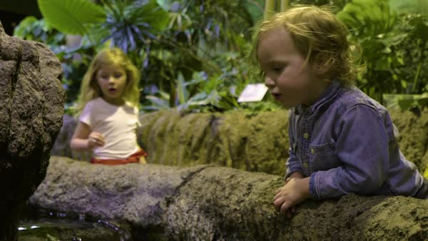 Little kids observe fish in a touch tank at an aquarium exhibit Royalty-free stock video