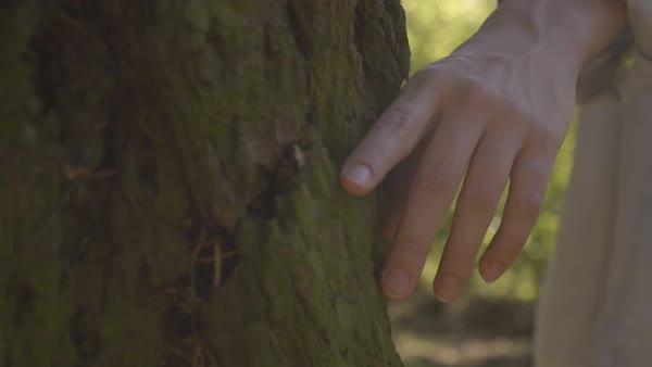 Slow Motion Closeup Of Young Woman's Hand On Tree, She Circles The Tree, Backlit By Sun (Steadicam Follow Shot) Royalty-free stock video