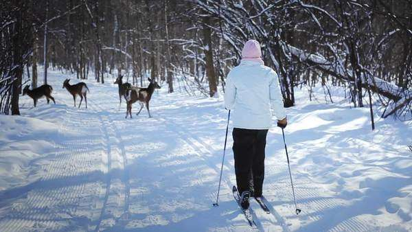 Woman Cross-Country Skiing With Deers in Wild Nature Royalty-free stock video