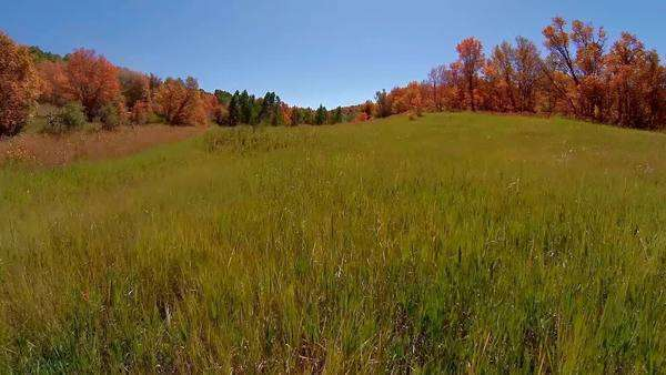 Aerial view moving through a meadow in the high rocky mountains as the fall colors are starting to change Royalty-free stock video