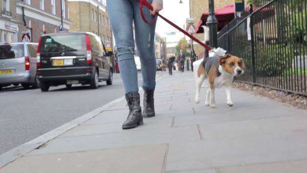 Camera tracks dog as he walks along pavement with owner. Royalty-free stock video