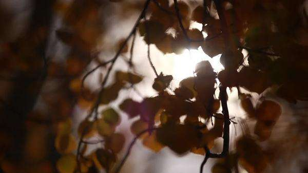 Close-up shot of sun shining through leaves in a forest Royalty-free stock video