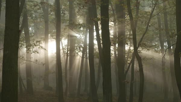 Sunrise in the forest with sunrays shining through trees in autumn Royalty-free stock video