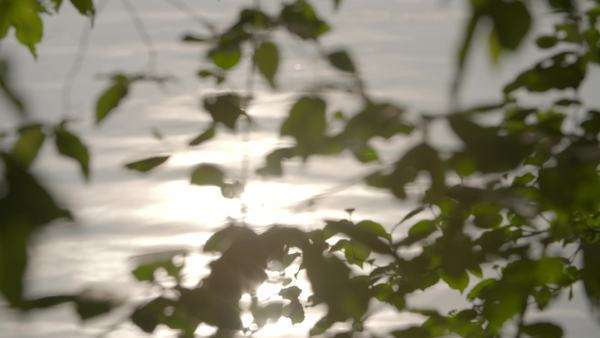 Close-up of a tree branches above standing water and a reflection of the sun in the water Royalty-free stock video