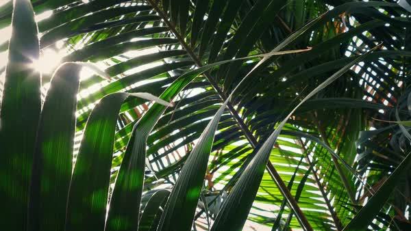 Sun flickers through lush tropical rainforest Royalty-free stock video