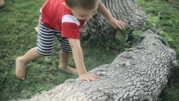 Handheld close-up of a little boy crawling on a tree trunk Royalty-free stock video