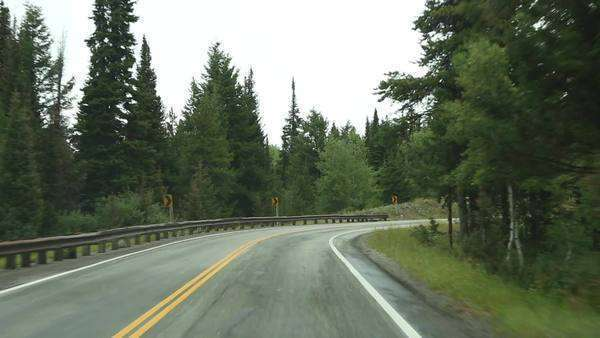 Handheld shot and point of view shot while driving on a road with pine trees on both sides Royalty-free stock video