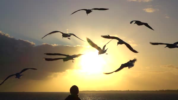 SLOW MOTION: Cute seagulls flying in the air above young womans head on beautiful fiery summer evening. Young female observing group of birds in the sky by the seashore at magical sunset Royalty-free stock video