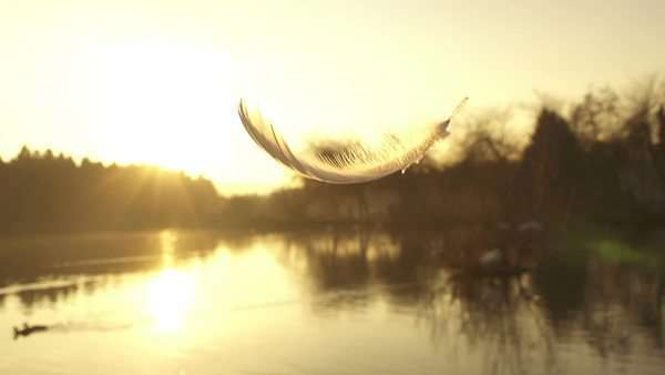 Slow motion of falling feather Royalty-free stock video