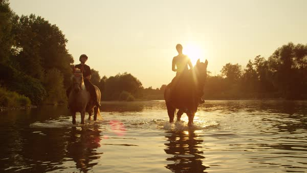 Two riders riding horses and walking in shallow water at magical golden sunset along overgrown riverbank Royalty-free stock video