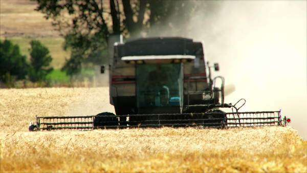 A large combine harvesting wheat near Joseph, Oregon Royalty-free stock video