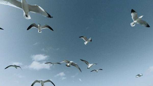 Gulls floating in slow motion Royalty-free stock video