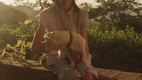 Girl is stroking a dog at sunset time Royalty-free stock video