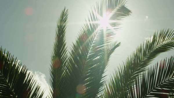 Looking at sun through palm tree leaves at sunset time. Royalty-free stock video