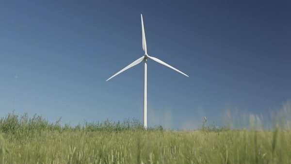 Wind turbine in the middle of a green wheat field Royalty-free stock video