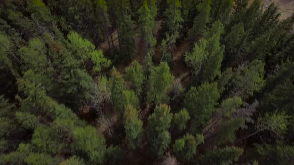 Aerial shot of a forest nearby snowy mountains Royalty-free stock video